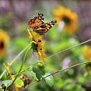 American Lady Butterfly By The Beach Poster