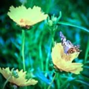 American Lady On Coreopsis Poster