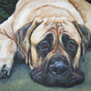 American Mastiff Poster