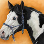 American Paint Horse - Soft Pastel Poster