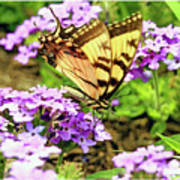 Yellow Eastern Tiger Swallowtail Series Poster