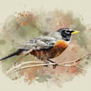 American Robin - Watercolor Art Poster