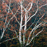 American Sycamore # 2 Poster