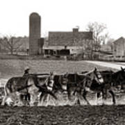 Amish Agriculture  Poster