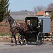 Amish Buggy And High Stepper Poster