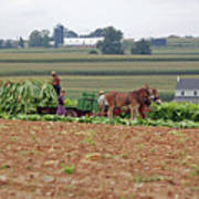 Amish Farm Harvest Poster by Joyce Huhra
