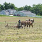 Amish Girl Raking Hay As Painting Poster