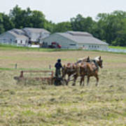 Amish Girl Raking Hay Photo Poster
