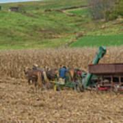 Amish Harvest In Ohio  Poster