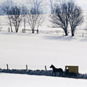 Amish Horse And Buggy In Snowy Landscape Poster
