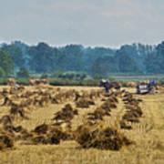 Amish Making Grain Shocks Poster