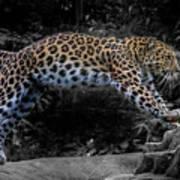 Amur Leopard On The Hunt Poster