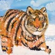 Amur Tiger Poster