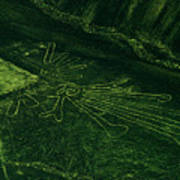 An Aerial View Of The Nazca Lines. They Poster