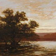 An Australian Mangrove. Ebb Tide Poster