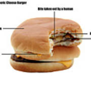 Anatomy Of A Generic Cheese Burger Poster by Michael Ledray