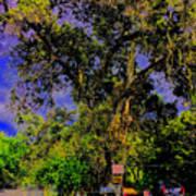 Ancient Oak At Rinconada De Los Gatos S Poster
