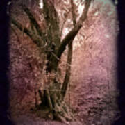 Ancient Tree By A Stream Poster