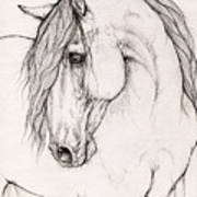Andalusian Horse Portrait 2015 12 08 Poster