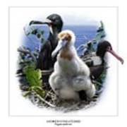 Andrews Frigatebird Fregata Andrewsi 1 Poster by Owen Bell