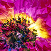 Anemone Abstracted In Fuchsia Poster