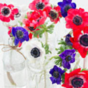 Anemone Flowers  Poster