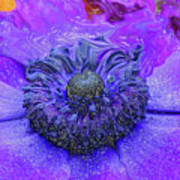 Anemone Poster