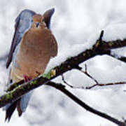 Angel Mourning Dove Poster