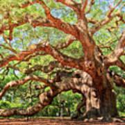 Angel Oak - Charleston Sc  Poster by Drew Castelhano