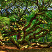 Angel Oak Morning Shadows Charleston South Carolina Poster