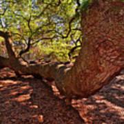 Angel Oak Tree 003 Poster