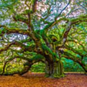 Angel Oak Tree Charleston Sc Poster