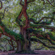 Angel Oak Tree Deeply Rooted History Poster