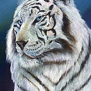 Angel The White Tiger Poster