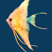 Angelfish II - solid background Poster