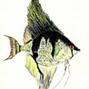 Angelfish Poster