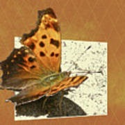 Anglewing Butterfly Poster