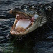 Angry Gator Poster