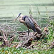Angry Heron Poster
