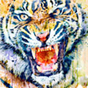 Angry Tiger Watercolor Close-up Poster