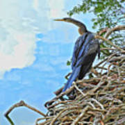 Anhinga In The Clouds Poster