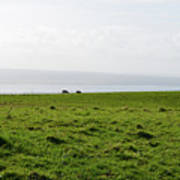 Animals Grazing In A Field Along The Cliffs Of Moher Poster