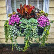 Annapolis Flower Box Poster