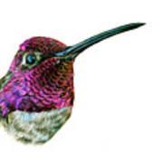 Anna's Hummingbird Poster by Logan Parsons