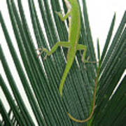 Anole With Palm - Cautious Poster