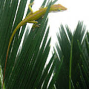 Anole With Palm - Flexible Poster