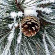 Another Frosty Pine Cone Poster