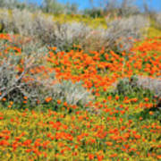 Antelope Valley Poppies Poster