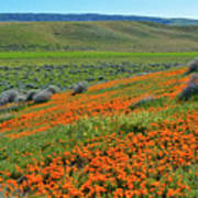 Antelope Valley Poppy Reserve Poster