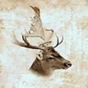 Antique Deer Poster